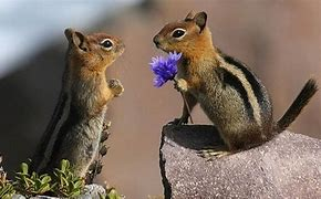 Image result for free pics of animals love