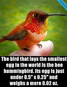Image result for Fact of the Day Bird
