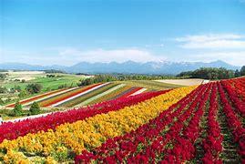 花畑 に対する画像結果