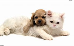 Image result for Adorable Pets