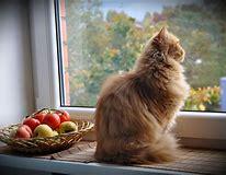 Résultat d'images pour images chat devant une fenêtre
