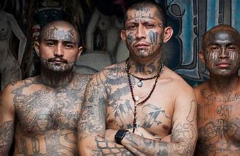 Image result for images salvatrucha gangs