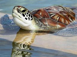 Image result for most beautiful turtle