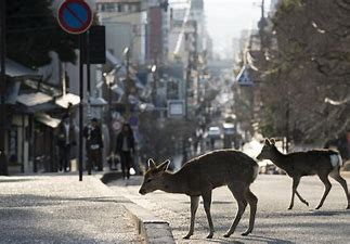 Image result for Animals Are Taking Over the Cities