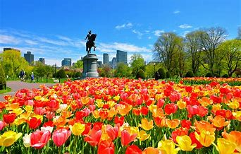 Image result for boston public garden