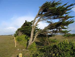 Image result for free picture of tree on windy mountain