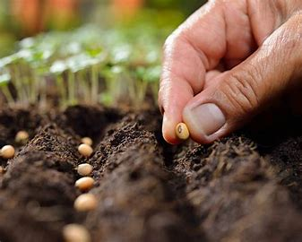 Image result for free images of planting seeds