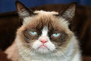 Résultat d'images pour photo belle de chat