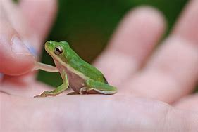 Image result for pictures of baby frogs