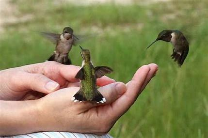 Image result for free images of hummingbirds and people
