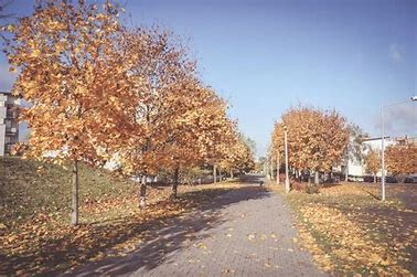 Image result for free picture of fall leaves on sidewalk