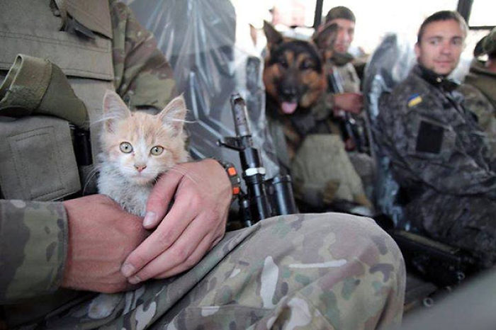 Australian Soldier Pleads Guilty to Storming Animal Shelter For His Cat