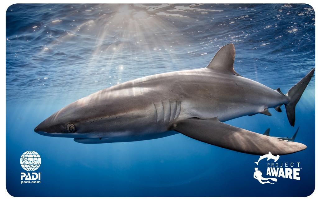 Aware Shark Conservation Course