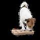 Pet Training & Behavior logo