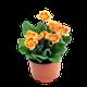 Perennials logo