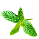 Herbs logo