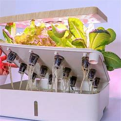 Hydroponic Growing System - Indoor Herb Garden, Smart Garden Starter Kit With LED Grow Lights For Home Kitchen, Plant Germination Kits (12 Pods, White