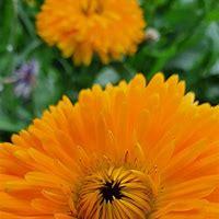 Çiçek Wallpapers