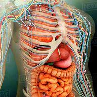 Anatomy Images