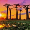 Avenue of Baobabs 1920X1080