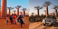 Avenue of the Baobabs Easy Story for the Kids