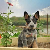 Breed Images