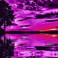Purple Gifs