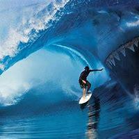 Sharking Wallpapers
