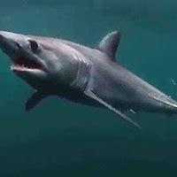 Sharks Gifs